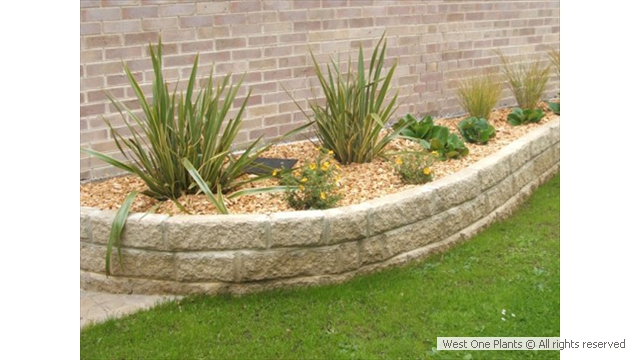 Low maintenance gardens benefit from the magic of low for Low maintenance outside plants
